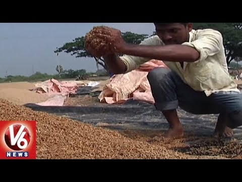Farmers Lose Crops As Sudden Rain Hits Several District Of Telangana | V6 News