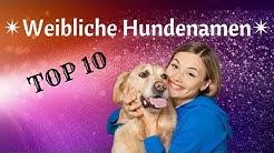 Hundenamen weiblich - Unsere Top 10 ❤
