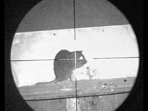 Pest Control with Air Rifles - Bro's Rat Missions - Видео онлайн