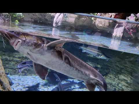 Dubai Aquarium & Underwater Zoo @ Dubai Mall