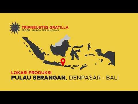 """CV Unigo Indonesia """"Fresh Gonad Served"""""""