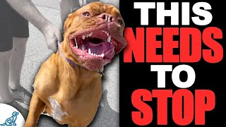 The 3 Steps For Teaching Your Dog To STOP Jumping Up!