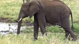 Африка.Спокойствие животных.