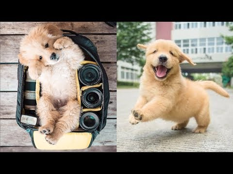 Cutest Dogs - ♥Cute Puppies Doing Funny Things 2019♥ #1