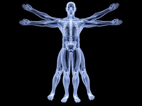 Anatomy Study Cards - Anatomy Flash Cards - Massage Therapy - YouTube