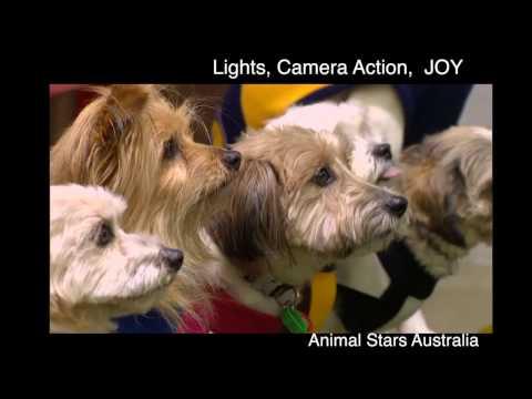 Animal Stars Australia