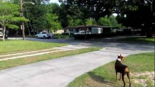 Orlando Dog Training- Teach Your Dog To Stay In The Unfenced Yard