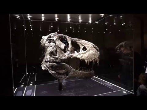 T-Rex Tristan in Berlin Natural History Museum