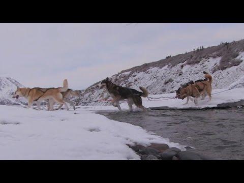 Raising sled dogs at Denali National Park