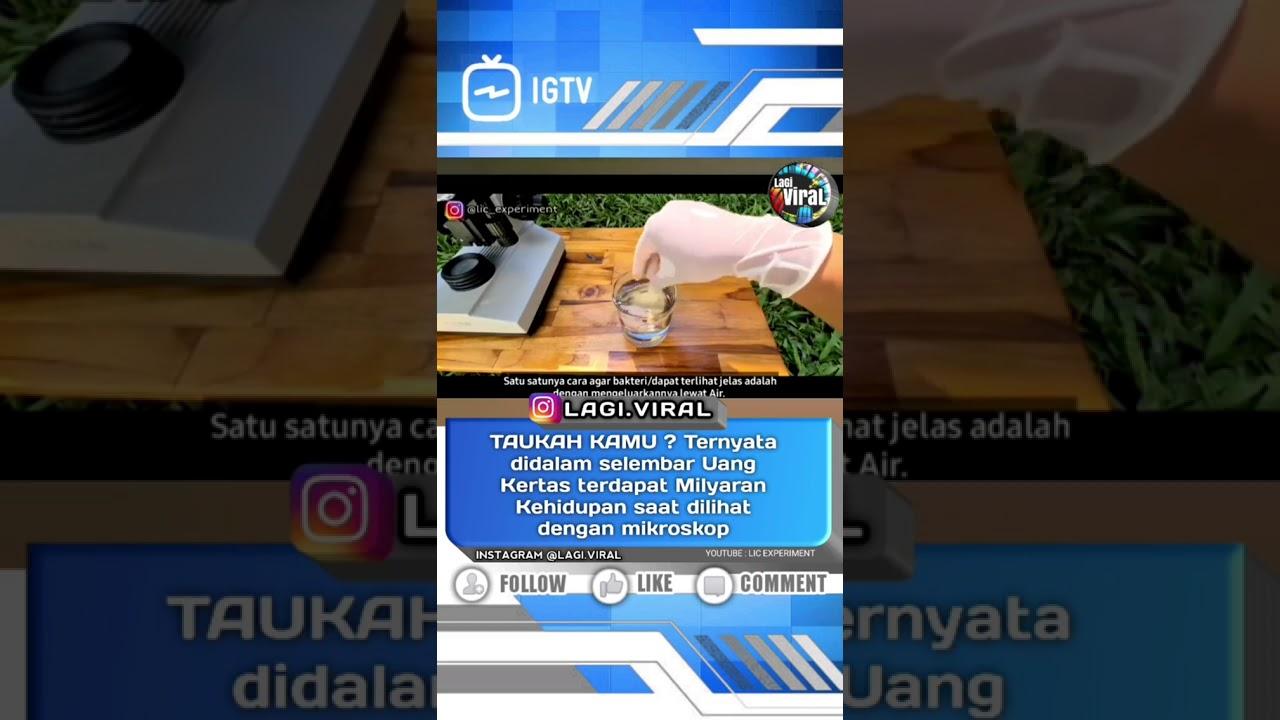 MILYARAN KEHIDUPAN DI DALAM AIR BEKAS RENDAMAN UANG KERTAS - YouTube