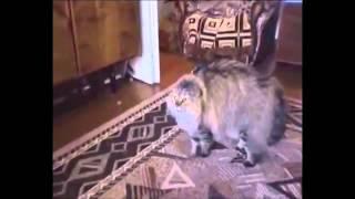 Смешные кошки видео ролики, подборка на 6 минут