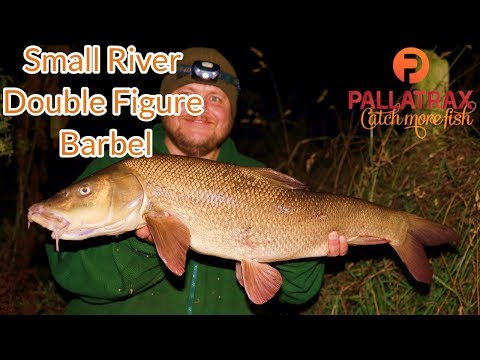 Barbel Fishing - Big Barbel From A Small River (Video 150)