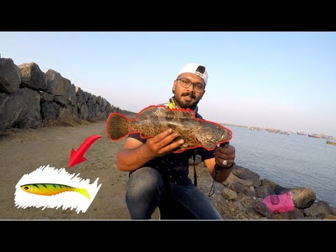 #hamoor hunt #fishing #kerala Hamoor hunt from kerala fishing harbour | Grouper fishing (malayalam)