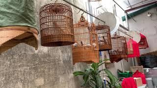 Lồng chim của Chim Cảnh Đất Việt vui vui cùng cả nhà !