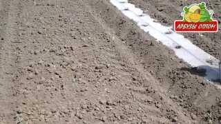 Высадка арбузной рассады из кассет в грунт(, 2013-10-25T19:04:32.000Z)