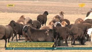 Вакцины против опасных болезней животных будут производить в Жамбылской области