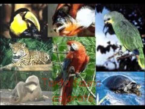 Foresta pluviale youtube - Gli animali della foresta pluviale di daintree ...