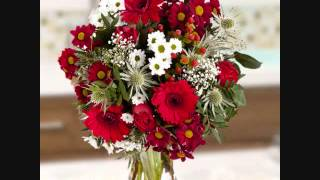 Floraqueen - Red and Pink flowers
