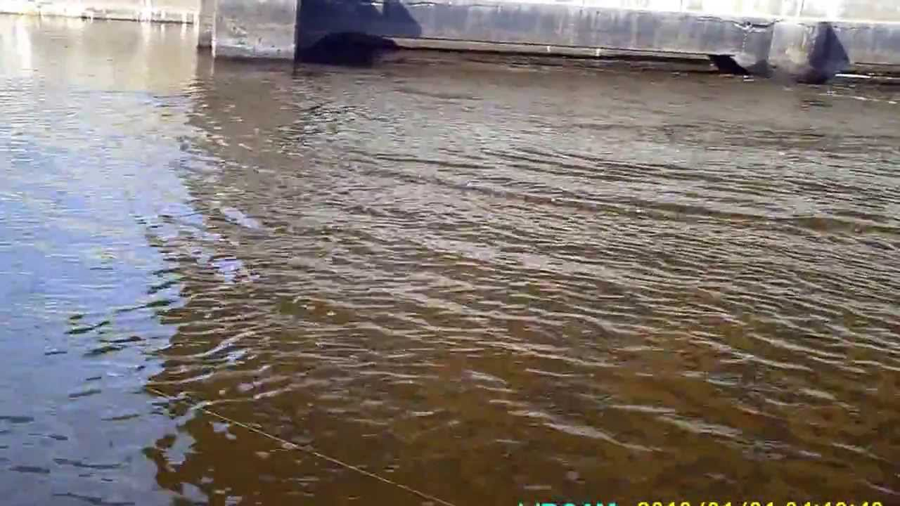 Wisconsin river musky fishing youtube for Wisconsin out of state fishing license