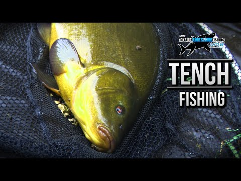 Tench Fishing with High-Stack Rods | TAFishing