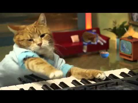 Keyboard Cat - The Lovecats
