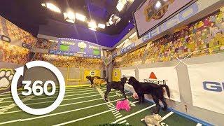 Puppy Bowl Practice Exclusive (360 Video)
