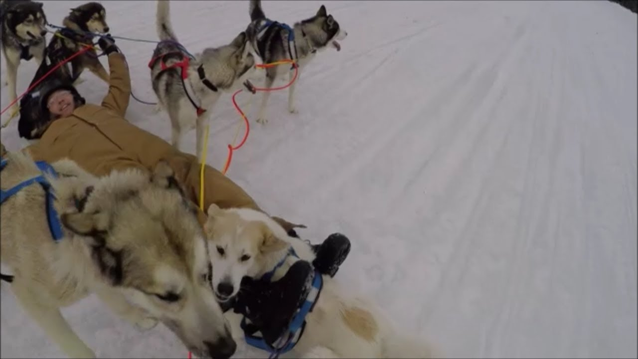 Epic Dog Sled Rescue at Bosebuck in Maine 2018