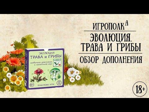 Эволюция. Трава и грибы.