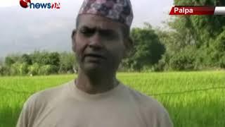सिंचाईको अभावमा पाल्पाको माडीफाँटमा धान उत्पादनमा कमी – NEWS24 TV