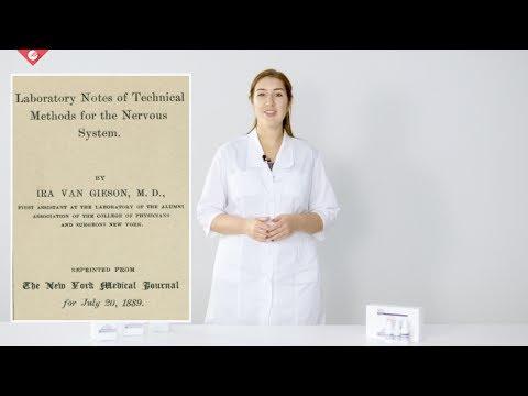 Collagen visualization: Van Gieson staining