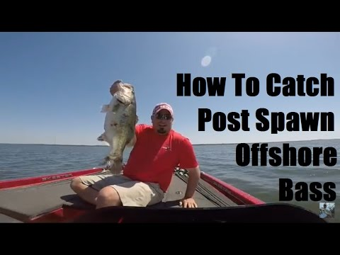 Lake Fork Bass Fishing: Offshore Structure Tips and Tactics