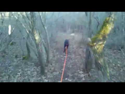 Наталья Бабкевич: конец следа в кустах