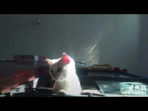 Cat Series: You jump, I jump