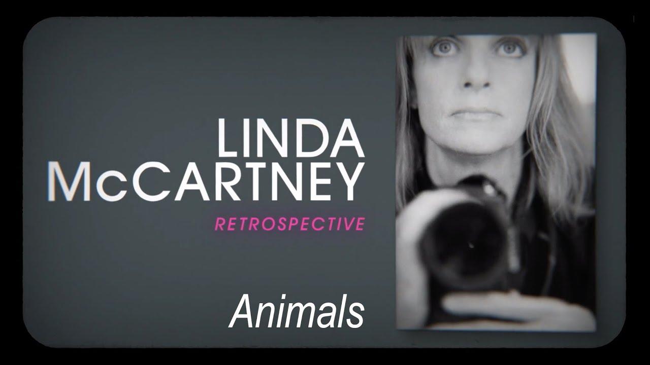 Linda McCartney Retrospective: animals and vegetarianism