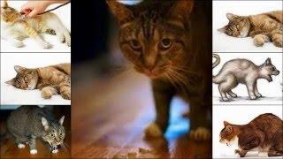 Симптомы и диагностика при рвоте у котов!
