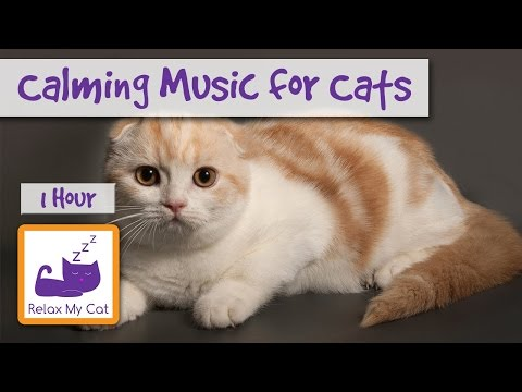 Calming Music for Cats and Kittens! 1 Hour of Relaxation Music to Calm Down Your Cat