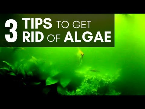 3 Tips To Get Rid Of Algae In An Aquarium (Managing Easily)