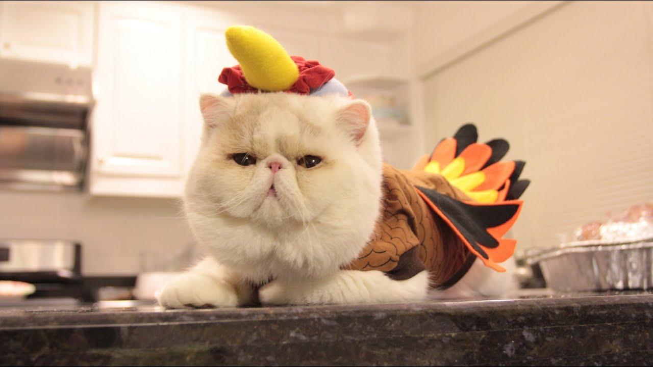 966db49de6 Jumbo Turkey Cat - YouTube