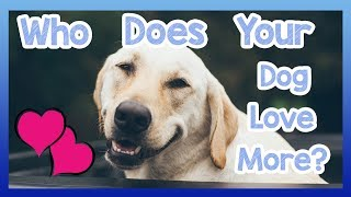 Who Does Your Dog Love More? Easy Ways to Find Out Which Human Your Dog Loves the Most!