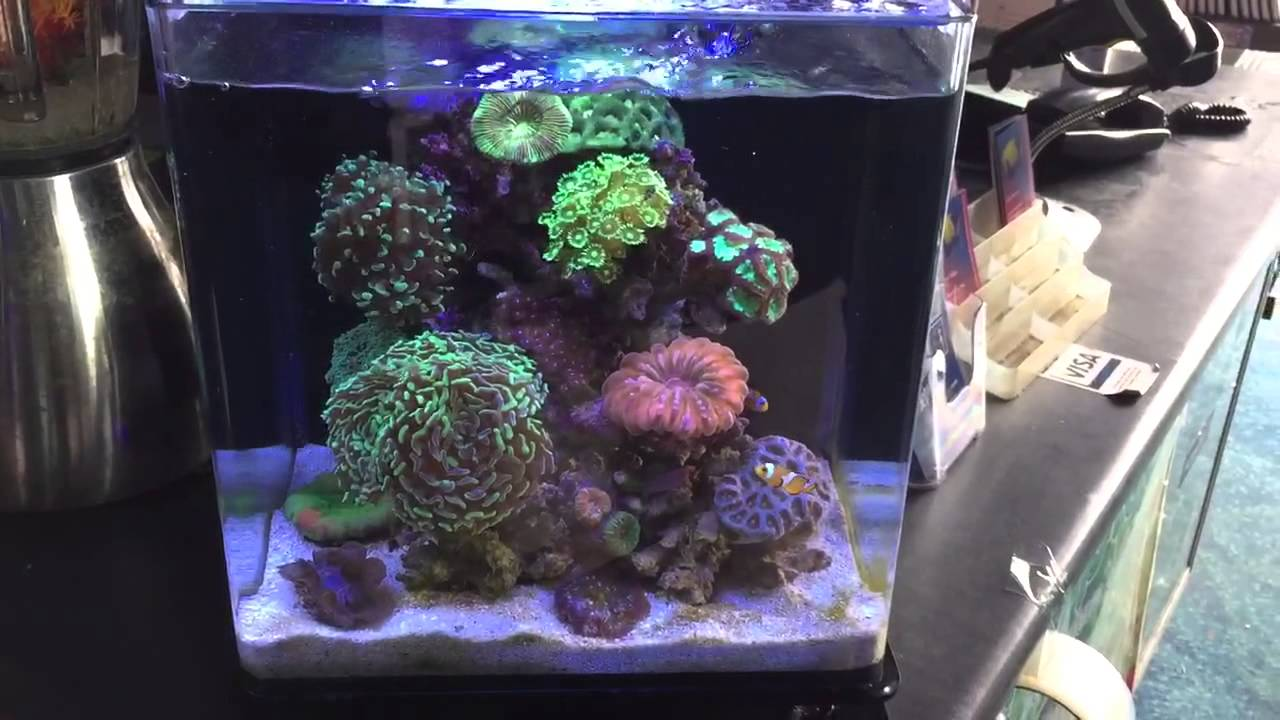 The Best Nano Reef Aquarium Ever Youtube