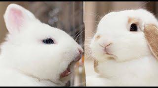 ПРИКОЛЫ С ЖИВОТНЫМИ//СМЕШНЫЕ КРОЛИКИ//СМЕШНАЯ ОЗВУЧКА//НОВОЕ СМЕШНОЕ ВИДЕО//funny bunnies