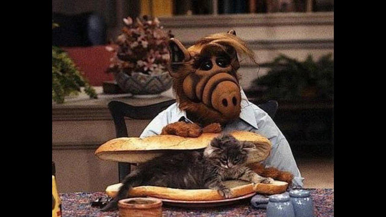 Alf Katze