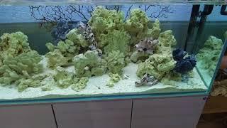 Обзор всех аквариумов - изменения за полтора месяца. часть 2