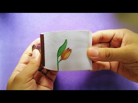Watch this flower blooming and closing   FLIPBOOK   ANIMATION