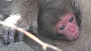 Newborn Baby 2015