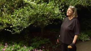 How To Prune A Sasanqua Camellia Video Tutorials With Plant Amnesty