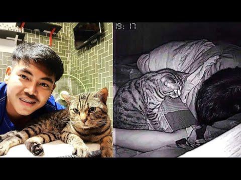 Мужчина установил камеру и узнал, чем занимается его кот по ночам