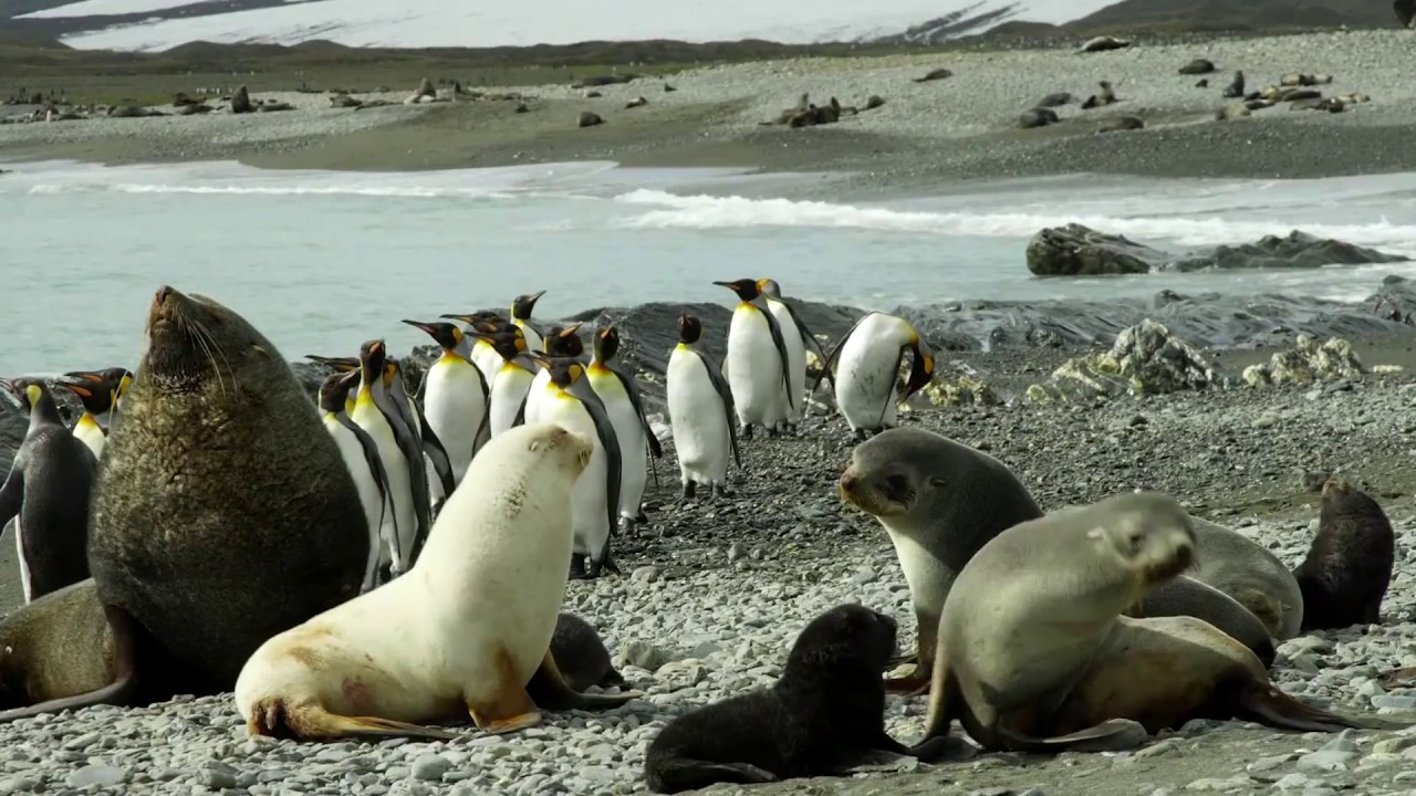 9 reasons to travel to Antarctica