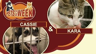 Pets of the Week #1 Cassie & Kara
