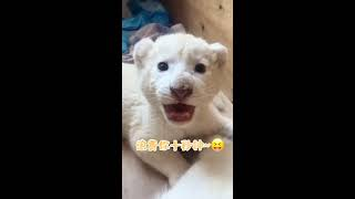 #Tik Tok# Funny people vs ZOO ANIMALS are WAY FUNNIER! - TRY NOT TO LAUGH